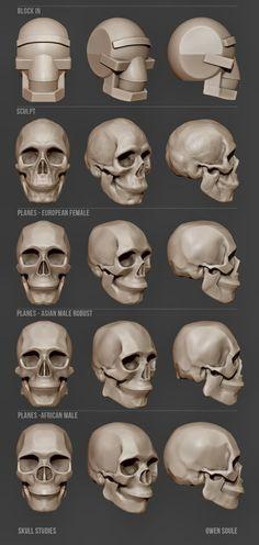 뼈 단순화 머리
