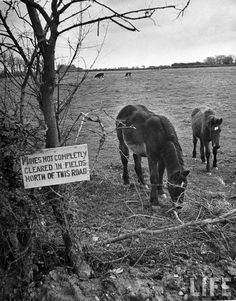 land mines, 1945,  France