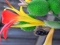 Podivuhodná rostlina