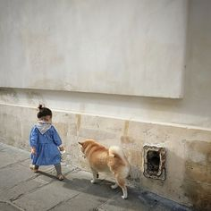 tiny place happy but: Photo Japanese Dog Breeds, Japanese Dogs, Animals For Kids, Animals And Pets, Cute Animals, Hachiko, Akita Dog, Kawaii, Puppy Mills