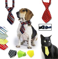 Only $12 for a Pet Necktie, 9 Swanky Styles to Choose From