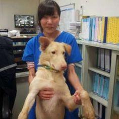Image caption                     Chien junto a su mascota.   Una nueva ley que prohíbe la eutanasia animal entrará en vigencia esta semana en Taiwán. La medida se produce casi un año después del estremecedor suicidio de una veterinaria profundamente afectada por la situación de los perros callejeros en ese país. Quizás la veterinaria y defensora de los animales Chien Chih-cheng estaba en el empleo equivocado, en el momento equivocad