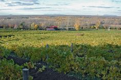 Le Domaine des Côtes d'Ardoise vu du haut de la colline en automne.