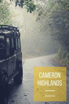 Cameron Highlands, Hiking Trails, Jungles, Mists, Strawberries, Hiking, Destinations, Viajes