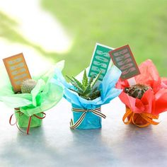 We love these adorable mini cactus party favors! More party favors: http://www.bhg.com/party/birthday/party-games/birthday-party-favors-for-adults/?socsrc=bhgpin083113cactusfavors=4