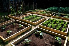 A nicely spaced grid of raised beds with gravel walkways between. If there is no turf between your beds, put down some landscape fabric and cover it with pavers or a layer of gravel to make tidy, mowing-free walkways. If you're leaving grass in the walkways, make sure the beds are spaced wide enough that a mower will fit between them.