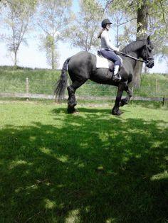 mijn hobby en sport is paardrijden. ik heb mijn eigen paard (wendy)