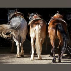 """'Amigos'.. an essay in warmth, in camaraderie, in dance. Mike Moir Photography ~ Escape to the greatest places on earth. Mounted Giclee' Canvas Examples of Sizes: 8"""" x 10"""" 16"""" x 20"""" 24"""" x 30"""" 30"""" x 40"""