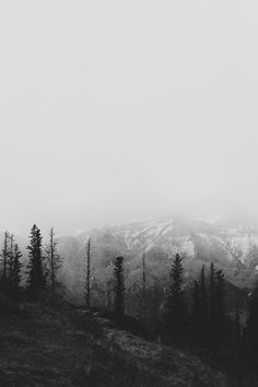 Grayscale Photography of Tree Covered Hills