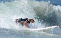The annual Surf City Surf Dog competition: Dogs of all shapes and sizes took   part in the 2nd Surf City Surf Dog tournament in the waves of Huntington   Beach, California.