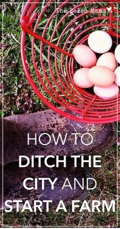 How to Ditch the City and Start a Farm   www.thepaleomama.com .001: