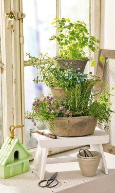 Kräutergarten für die Fensterbank - kraeutergarten