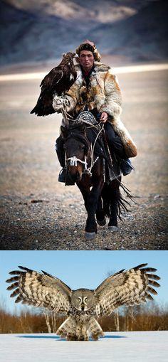 Certified Badass mongolian hunter . The Great Grey Owl