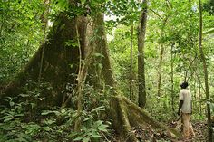 Rainforest Gabon - community action for sustainability - CASwiki National Geographic, Forest Habitat, Wild Elephant, African Nations, Natural Phenomena, Congo, Travel Pictures, Psychedelic, Norway