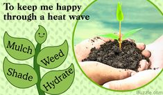 Steps to protect your plant from a heat wave