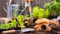 Jaro na zahradě bez chemie: Dusíkaté vápno nastartuje růst a zahubí plevel i slimáky Stuffed Mushrooms, Vegetables, Chemistry, Stuff Mushrooms, Vegetable Recipes, Veggies
