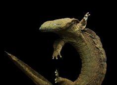 North America's biggest salamanders, hellbenders can grow as long as 2.5 feet!