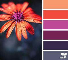 flower For inspiration, art, design, color match, color scheme. You can use pallets for inspiration, decor, design.