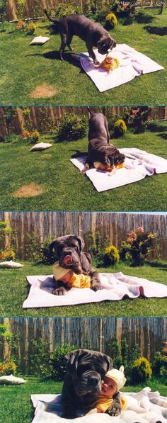 One of my favorites...  big doggie snuggling his baby!!!
