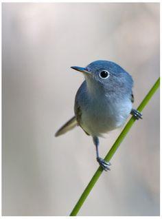 muted... J'veux poser des oiseau.. les capturer en images!!!
