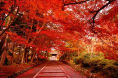 Autumn Red, Kyoto, Japan