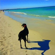 Where do you walk your pooch?  This is Sara S's pic of Whitfords Dog Beach, Northern Region #capturethecover