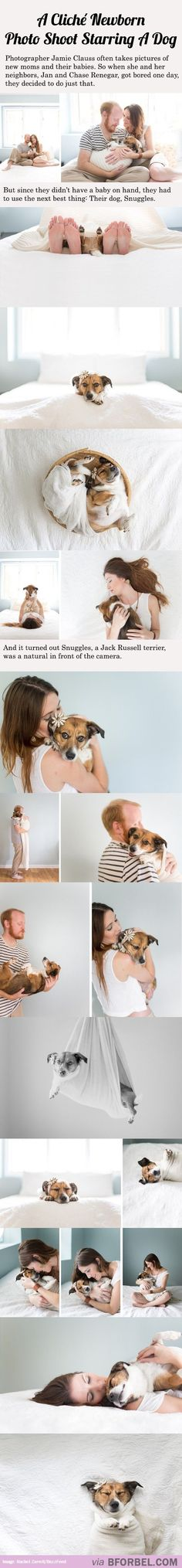 This Pin was discovered by Brandy Marvel. Discover (and save!) your own Pins on Pinterest. | See more about dogs, photo shoots and funny..