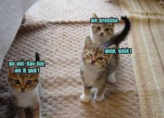 These kitties are adorable, but the winky one makes me LOL.