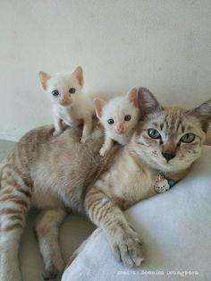Kittens & cat ♡
