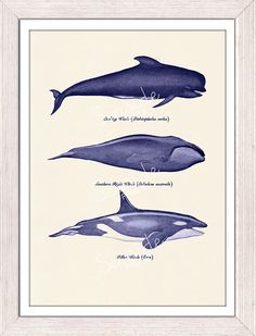 Whales and dolphins n1- sea life print- Home wall art whales print via Etsy