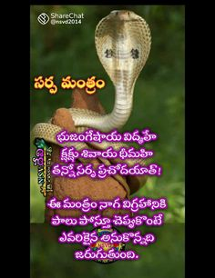 Devotional Quotes, Daily Devotional, Hindu Vedas, Telugu Inspirational Quotes, English Collocations, Bhakti Song, Free Hand Rangoli Design, Hindu Culture, Lord Shiva Family