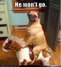 funny dog pictures - He won't go.