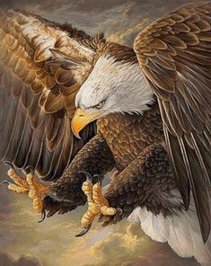 """Like eagles, they swoop down to devour their prey. Eagle Images, Eagle Pictures, Benfica Wallpaper, Aigle Animal, Eagle Wallpaper, Bokeh Wallpaper, Pastel Wallpaper, Iphone Wallpaper, Eagle Drawing"