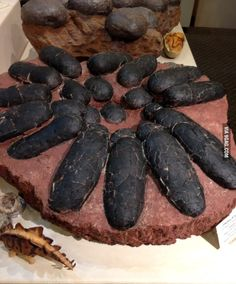 Fossilized Dinosaur eggs - 9GAG
