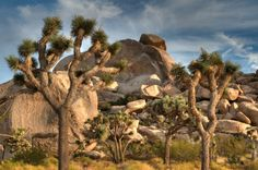 Views in Hidden Valley in California's Joshua Tree National Park