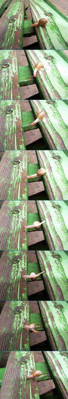 El salto del caracol  Una divertida e ilustrativa serie de imágenes para todos aquellos que alguna vez se han encontrado un caracol en un lugar donde era imposible que hubiera llegado.