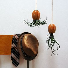 Beautiful, easy-to-care for and perfectly, simply, wild Air Plant Pods.