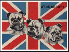 ENGLISH BULLDOG DOG HEAD STUDIES ON FLAG GREAT VINTAGE STYLE DOG PRINT POSTER