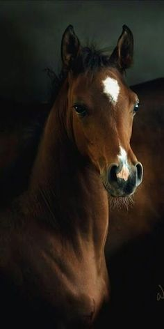 Regal beautiful colt!