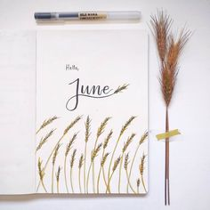 Bullet journal monthly cover page, June cover page, wheat drawing. | @kawariisjournal