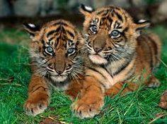 Resultado de imagem para animais fofos do mundo