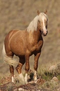 2283 best equus images in 2019 beautiful horses pretty horses rh pinterest com how to tame a equus xbox how to tame a equus in ark survival evolved