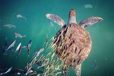 SOS Mata Atlântica - Twitter: Necessitamos rever nossos valores em relação ao mar e à todas as criaturas que ali vivem p… http://ift.tt/28IUws1
