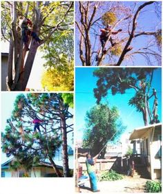 Grampa Sig's Tree Service has been providing honest and reliable solutions for more than 2 decades. Apart from doing tree work, these bonded and insured pros also offer gutter cleaning services.
