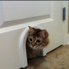 I installed on door to a storage room  where we keep her litter box...  Cathole.com  Love it!!