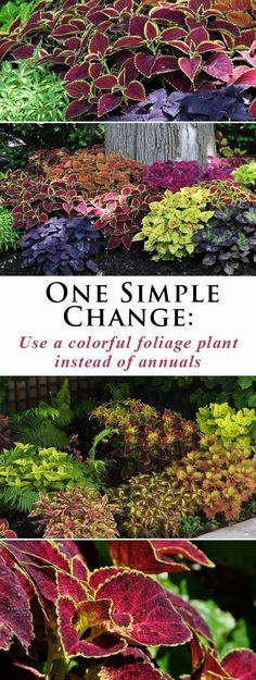 Three Dogs in a Garden: One Simple Change More #LandscapingIdeas