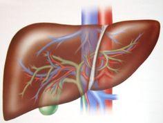 Karaciğer yaklaşık 12 ilginç gerçekler