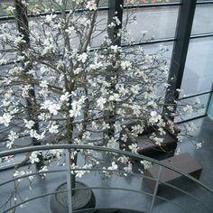 Magnolia kunstboom van 500cm hoog  www.setafiori.nl