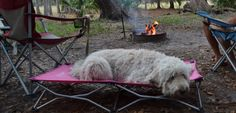Dog camping cot - Carlson Pet Products