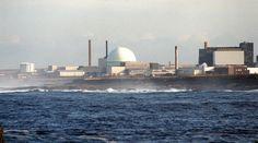 Radioactive honey found near nuclear power station — RT UK
